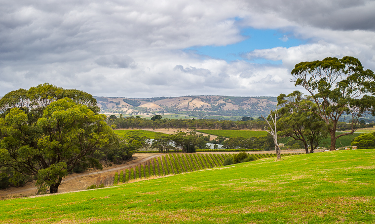 McLaren Vale, Australia (The Lead South Australia)